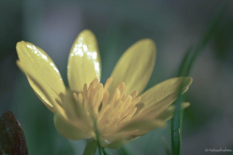 Blumenwiese-3